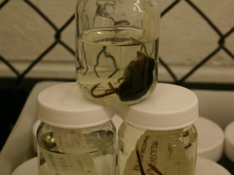 Mammal Wet Specimens