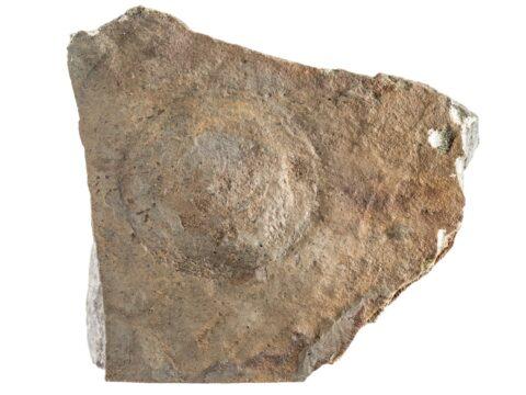 Beltanella-like hyporelief
