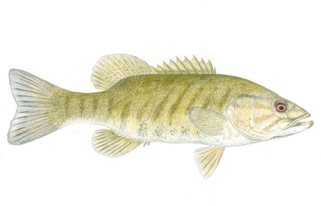 Something Fishy Elementary Lesson