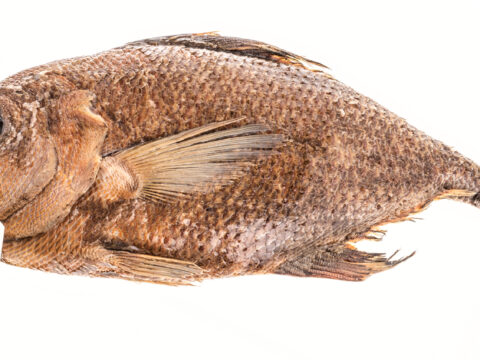 Rough Pomfret
