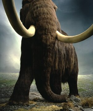 Exhibit-Mammoth