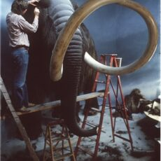 This is a photograph showing a museum taxidermist covering a fabricated Woolly mammoth in muskox hides.