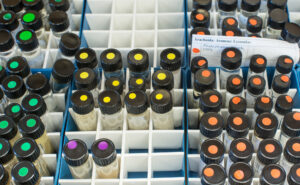 This is a photograph of a drawer filled with vials containing spider specimens at the Royal BC Museum.