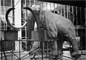 This is a photograph showing an early stage of fabrication of the Royal BC Museum's Woolly mammoth.