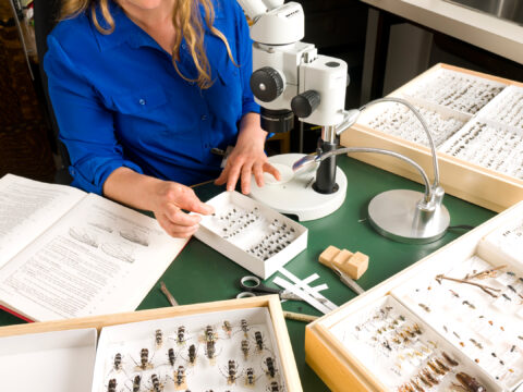 Peek behind the scenes in a video about the Royal BC Museum entomology collection.
