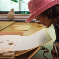 This is a photo of Susan Treadway smiling and looking at botany specimens in the herbarium at the Royal BC Museum.