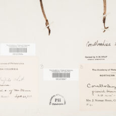 This is a close-up view of a botany collection record.