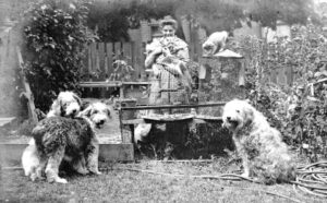 A black and white photograph of artist Emily Carr in her garden with three dogs, two cats and two bird cages, one of which has a parrot inside.