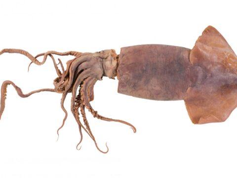Watch videos about alien marine species.