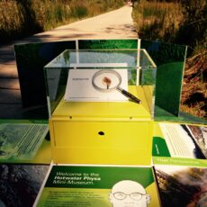 A museum exhibition about an invertebrate animal, Hotwater Physa, set up outside near Liard Hot Springs, BC. A person walking on a trail in the background.
