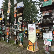 Posts covered with signs outdoors, with trees in the background and a Royal BC Museum sign in the midst of the signs.