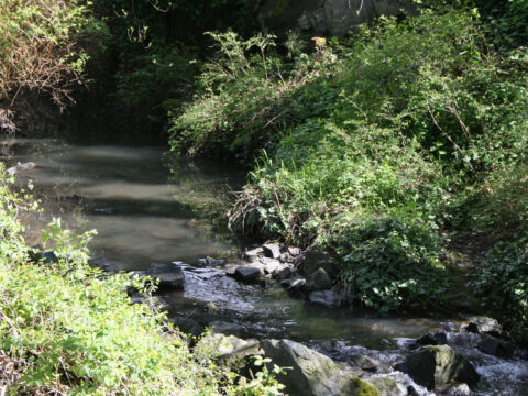 Pollution in Bowker Creek and how it affects Animal Life