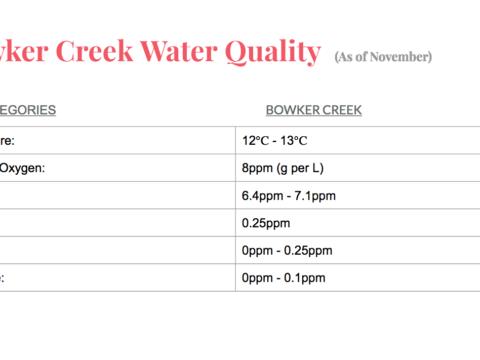Bowker Creek's Current Statistics