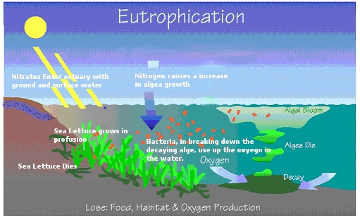 Eutrphication Learning Portal