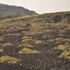 Patches of low-lying green plants are seen growing amidst rocky ground and gravel.