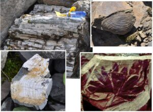 Four different fossils from different locations in British Columbia.