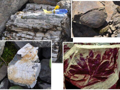 Alpine fossils