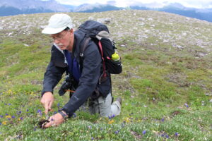 Man with backpack kneels in an alpine meadow as he collects plants.