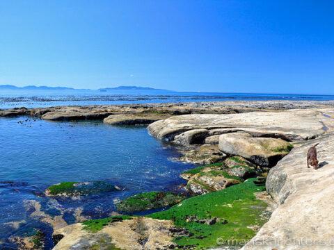 Species of Victoria's Beaches