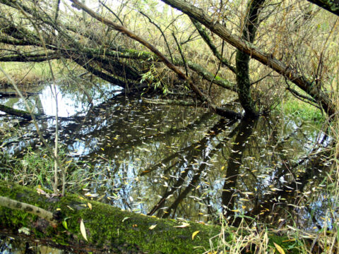 What are the native medicinal plants of Bowker Creek?