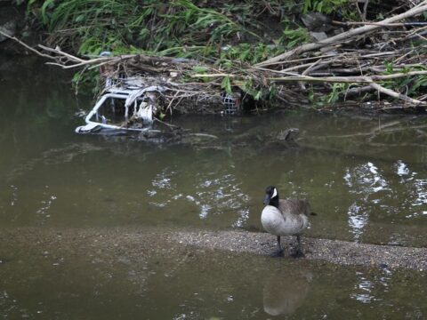 Bowker Creek's polluted waters