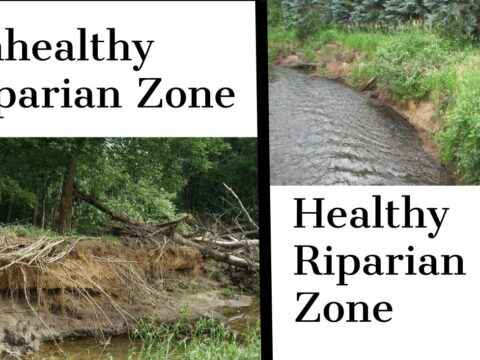 How Riparian Zones Reduce the Risk of Erosion and Bank Failure