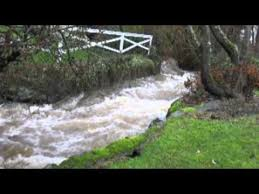What are the Environmental Issues of Bowker Creek?