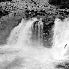 Black and white photo of a small waterfall and one fish jumping up.