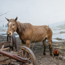 A horse stands in a mucky field with a chicken by its side.