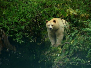 Image of a white bear surrounded by greenery.