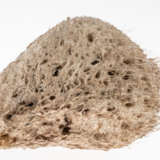 Dirty white oval-shaped sponge with holes in it and long stiff hair-like strands on the outside.