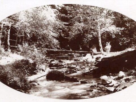 What did Bowker Creek look like when it had salmon?