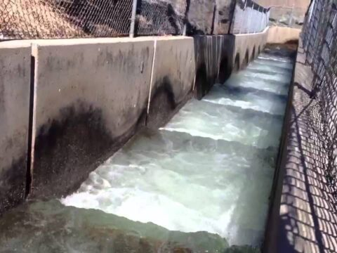 How do You Make the Creek Inhabitable For Salmon?