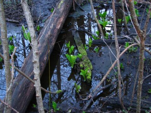 The history of Bowker Creek