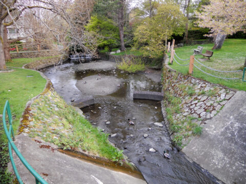 What is Bowker Creek?