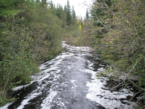 How has Bowker Creek's ecosystem changed since salmon inhabi