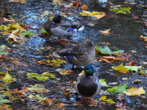 Animals in Bowker Creek