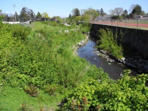 Terrestrial Plants in Bowker Creek