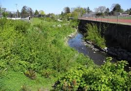 How does the plants in the area affect the water quality?