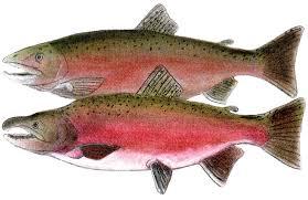What kinds of salmon ran through Bowker Creek?