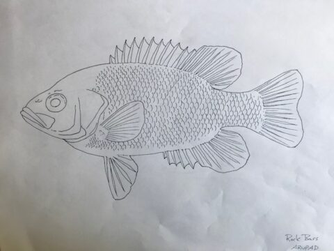 BC Fish Colouring Sheets