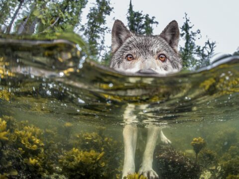 Consumers 2: Sea Wolves