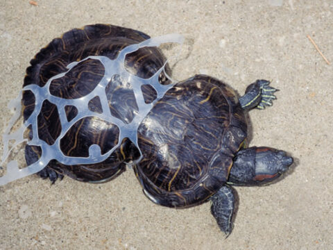 How does plastic affect marine animals?