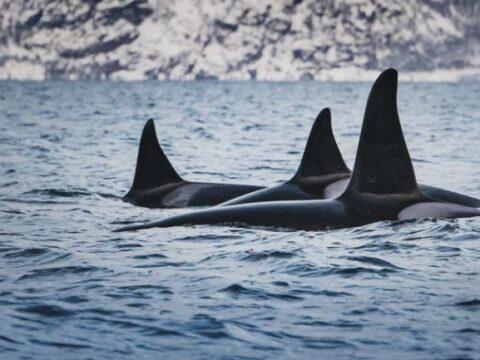 Orca Inquiry- Professional Development for Educators