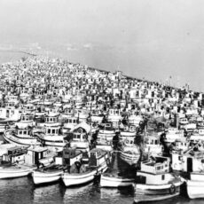 A photograph of a series of fishing boats tied in flotillas at Annieville dike.